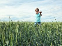 Boy on the field of rye. stock photos