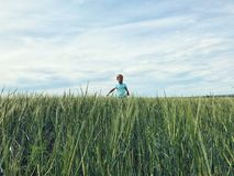 Boy on the field of rye. stock image