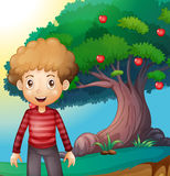 A boy standing in front of the apple tree Royalty Free Stock Photography