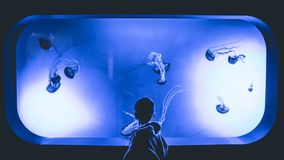Boy Standing in Front Of Jelly Fish Aquarium With Purple Light Stock Photo