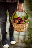 The boy standing on a path in the garden with wicker basket full of apples. royalty free stock photo