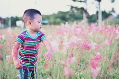 Boy Standing Surrounded by Bed of Red Petal Flower Stock Images