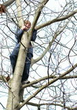 Boy standing on the tree Stock Images