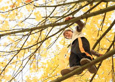 Boy standing on the tree Royalty Free Stock Photography