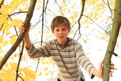 Boy standing on the tree Royalty Free Stock Images