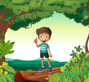 A boy standing on wood in nature Stock Image