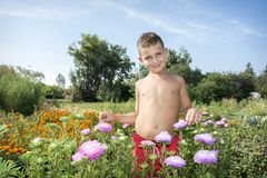 The boy stands in the flowers of the asters in the garden. Royalty Free Stock Images