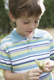 Boy In Striped Tshirt Holding Flower Stock Images