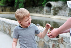Boy stroking duckling Stock Image