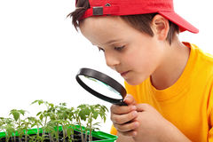 Boy studies young plants. Looking through magnifier - closeup Stock Images