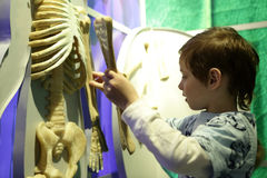 Boy studying human anatomy Stock Photos