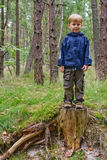 Boy on a Stump. Little boy standing on a stump in the forest Stock Images