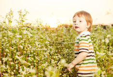 Boy at summer buckwheat Royalty Free Stock Photography