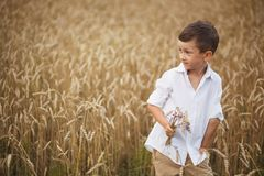 Boy in summer field. The concept of freedom and happy childhood royalty free stock image
