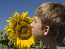 Boy and sunflower Stock Photography
