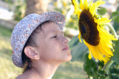 Boy and sunflower Royalty Free Stock Image