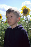 Boy in sunflower field royalty free stock photography