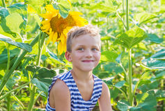 Boy among sunflower field Stock Image