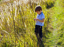 Boy in the sunny summer Stock Photography