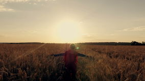 Boy with a superman cape stands in a golden fields. Looking to the horizon stock footage