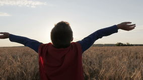 Boy with a superman cape stands in a golden fields. Looking to the horizon stock video footage