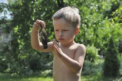 Boy survives the death of a sparrow Royalty Free Stock Photography