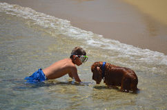 Boy swimming with dog 2 royalty free stock image
