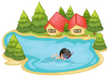 A boy swimming in the pool surrounded with pine trees Stock Photography
