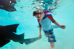 Boy swimming underwater with nurse sharks Stock Photography