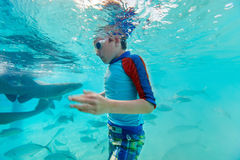 Boy swimming underwater with nurse sharks Royalty Free Stock Photos