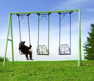 boy on swing Stock Photo