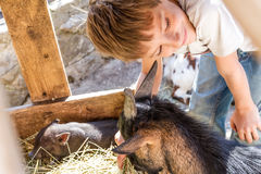 Boy taking care of domestic animals on a farm Stock Photos