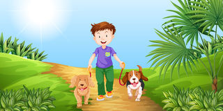 Boy taking dogs for walk in the park. Illustration Stock Photos