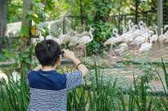 Boy taking photo of animals in zoo by phone Stock Photos