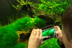 Boy taking picture of aquarium with smart phone Stock Photo