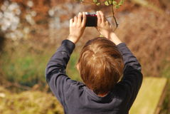 Boy taking picture of willow branches. A boy takes a picture of the flowers of a willow tree in spring Royalty Free Stock Images