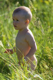 Boy in a tall grass Stock Image