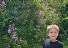 Boy tasting nectar from lilac flower royalty free stock photography