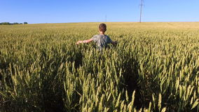 Boy Teenager walking on the wheat field. Wheat born a tall and thick. stock video
