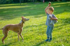 Boy throwing ball for a dog Royalty Free Stock Photo