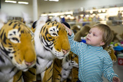 The boy and tigers. The boy irons a soft toy of a tiger royalty free stock image