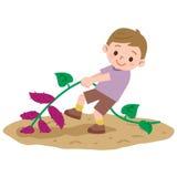 Boy to a sweet potato digging Stock Photo