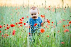 Boy toddler in a meadow. Full of red poppies Stock Photos