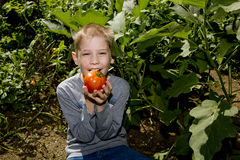 Boy with tomato stock photos