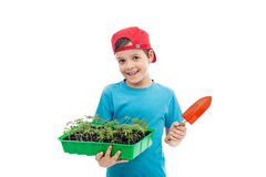 Boy with tomato seedlings in tray Royalty Free Stock Photo
