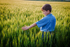 Boy touching green ears of wheat on field Royalty Free Stock Photos