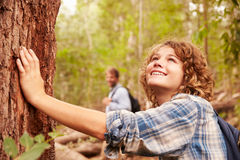 Boy touching a tree in a forest, his father in the background royalty free stock photos
