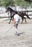 Boy training horse Royalty Free Stock Photo