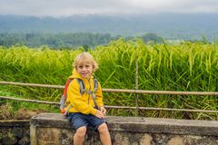 Boy traveler on Beautiful Jatiluwih Rice Terraces against the background of famous volcanoes in Bali, Indonesia stock photography