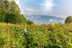 Boy traveler walks through tall grass past a forest, following the sun royalty free stock images